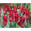 tulipan red dress