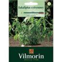 Eukaliptus Cytrynowy
